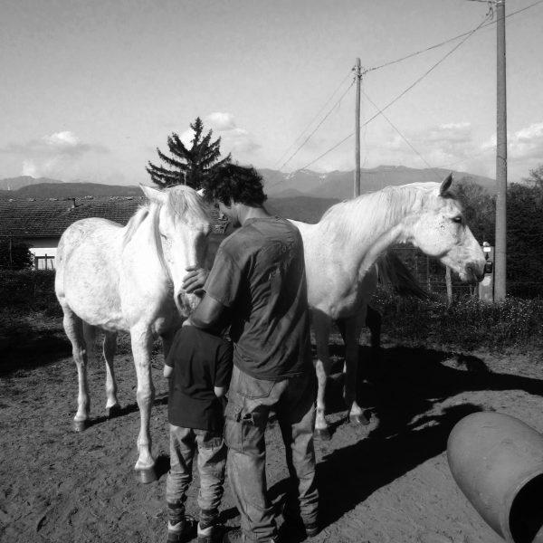 cavalli_si